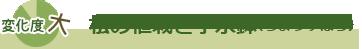 松の植栽と手水鉢(ちょうずばち)
