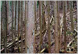 エコな材料間伐材